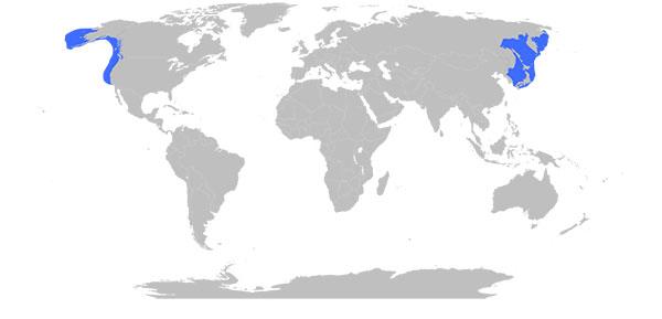 北太平洋巨型章鱼