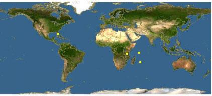长隆海洋王国亚达伯拉象龟